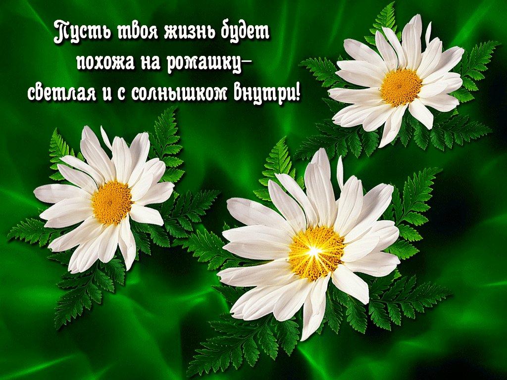 Картинки цветов с надписями для тебя солнышко