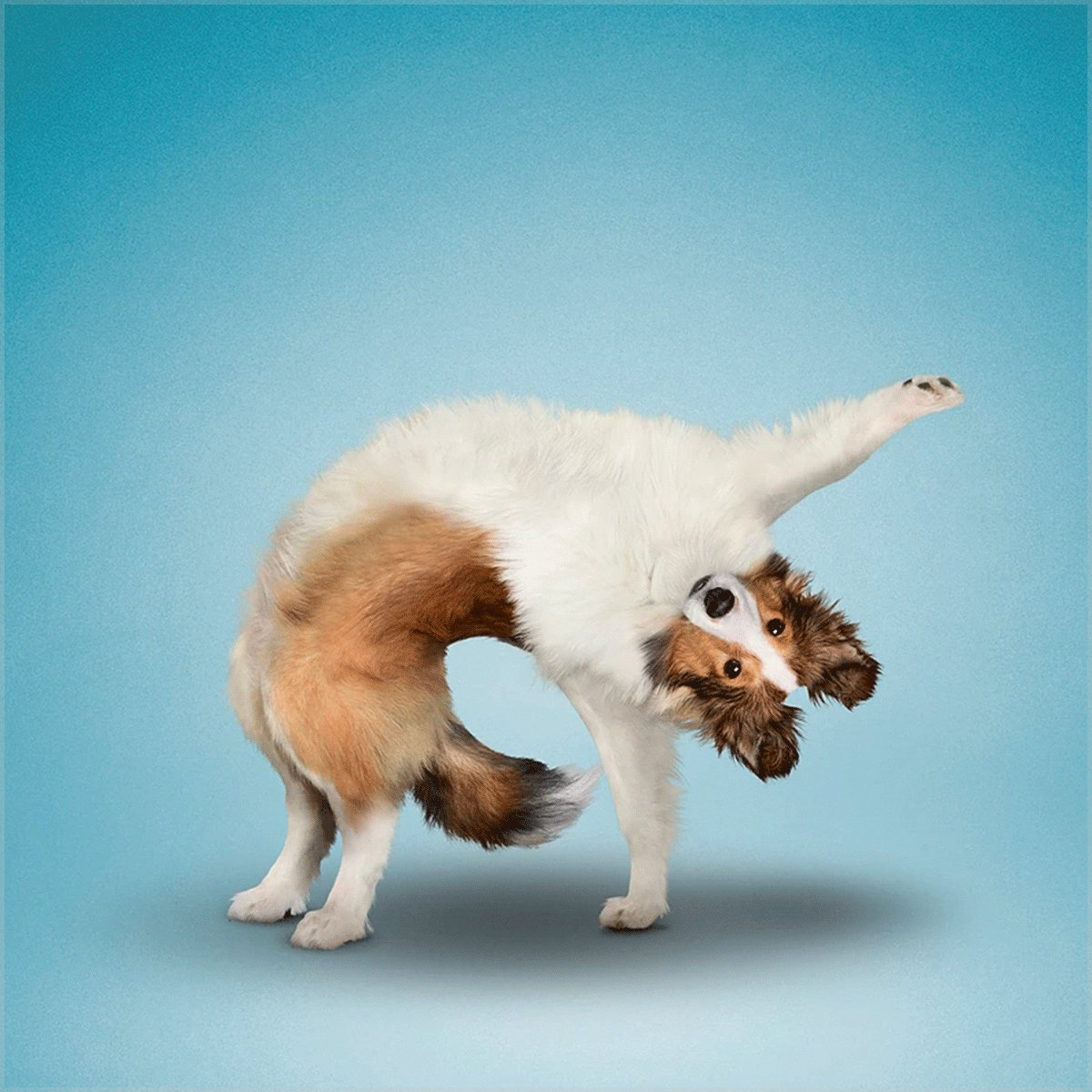 Paws up if you want to do yoga   Stretch your imagination with #photohrapher Dan Borris: @yogadogs and see our furry friends star in his paw-some #artwork.  Check out his #Wix site >> https://wix.click/2sSIwedpic.twitter.com/QZb2nO8UGu