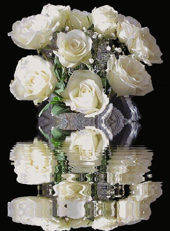 Белые розы гифки красивые