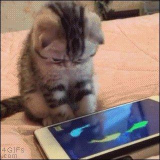 @Momoka_Koizumi Best of luck & never give up.  Will kitten GiFs help? https://t.co/sZ19M3DguF
