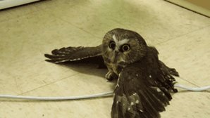 "Dear Rupert Grint, our ""happy birthday\"" owl is on its way!"