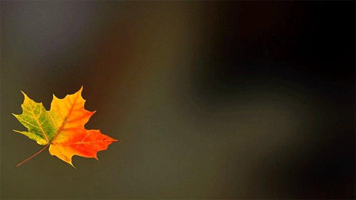 Смешные, анимация осенние листья