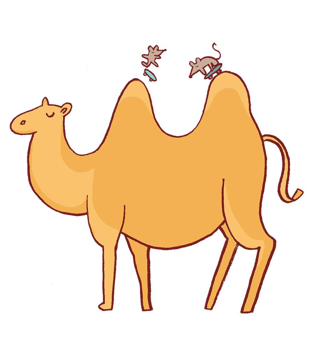 Картинка анимация верблюда