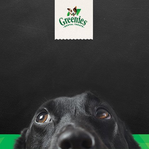 Summer's over but your pets don't know that. Keep their tails wagging while the kids are away with Greenies. #greenies #barktoschool #backtoschool #dogsofinstagram #dogtreats #doglife https://t.co/NLKbLBaLUI https://t.co/nsXfzj0ZRT