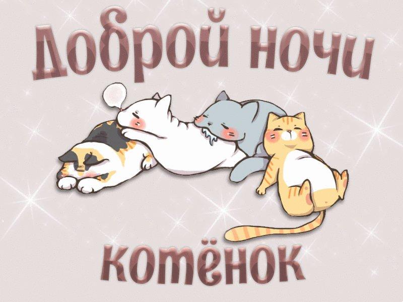 Любимой, открытки с британским котенком доброй ночи