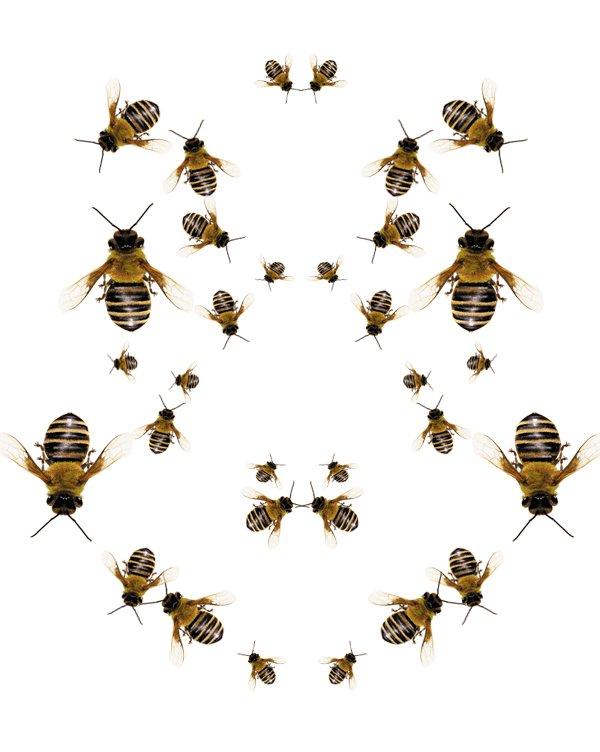 анимация пчелы летают на прозрачном фоне олега