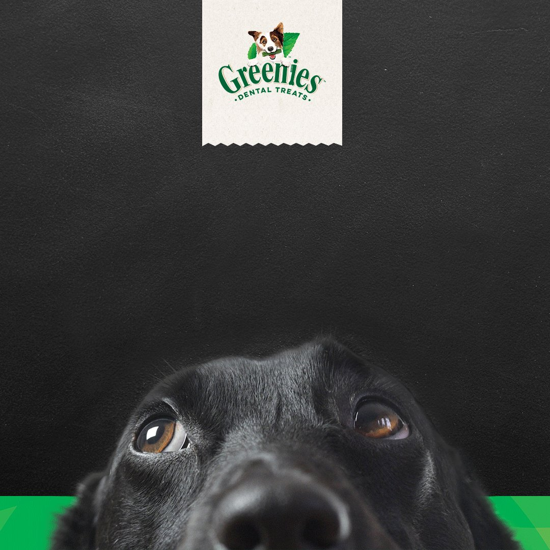 The kids are all stocked up for back to school, but what about your fur kids?  Keep smiling ear to adorable ear all year long with Greenies. [SW1]  #greenies #barktoschool #backtoschool #DogsofTwittter #dogtreats #doglife https://t.co/umG9Ov7I1w https://t.co/w4lDDVAqUM