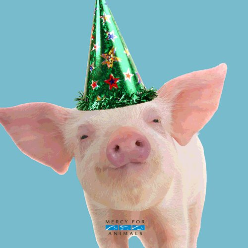 Happy birthday, Thank you for being a voice for farmed animals!