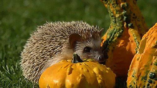 When it's finally #October1st. youtu.be/4EZXVRWiTaA