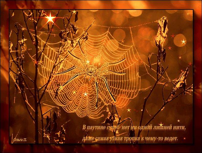 Открытка паутина