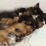 犬犬犬のだんご三兄弟だと思ったら…!みんな仲良し!
