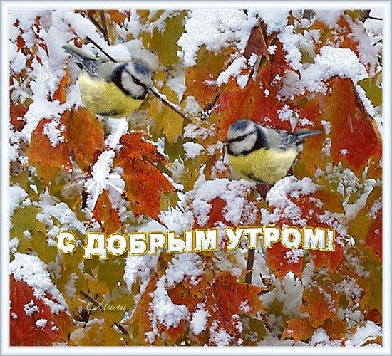 с первым снегом доброе утро картинка приведение стоп часто