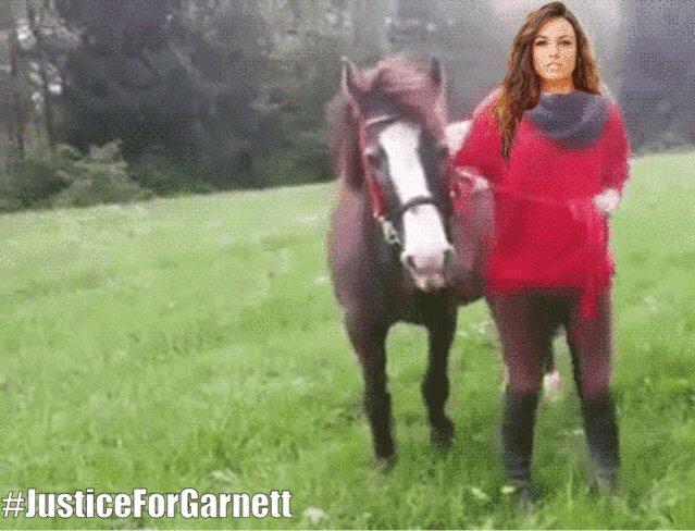 Смешные гифки с лошадьми, приколы картинки