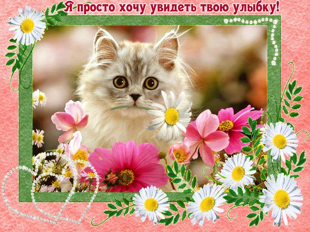 Картинки с котиками и пожеланиями