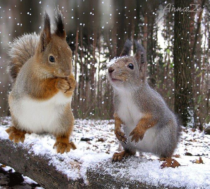 Картинки белок и зайцев зимой