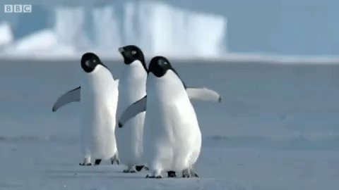 Honestly, I couldn't cope last night watching #Dynasties @BBCEarth  😱😭😱😭🥺😩🥺😩🐧🐧🐧🐧 https://t.co/XLhIMY