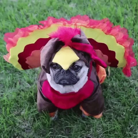 @Ariel_Foxxx Happy Thanksgiving https://t.co/ASCKc5uEo6