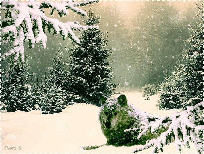 Анимация картинка зима в лесу
