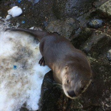 Oregon Zoo's photo on #TypoASpecies
