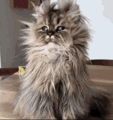 RT @superfastSY: Happy #Caturday! Anyone else woken up feeling like this... https://t.co/6WWVD3WWcd