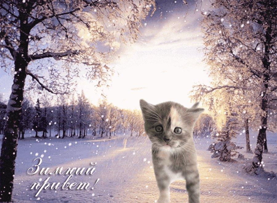 Картинки зимние с животными с добрым утром