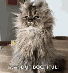 שוב לא ישנתי טוב ואני עייף ברמה שכוס הקפה השלישית נרדמה לי ביד