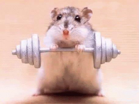 Only Jedi Hamster Mandy's photo on #ImSpringTrainingFor