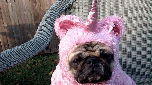 Lisa💖♿�'s photo on #dogshowschmovies
