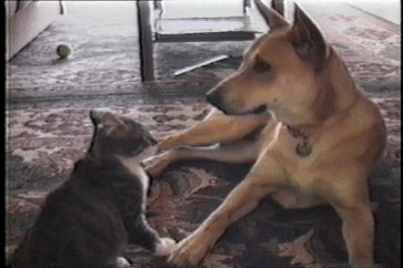 Didn't think cats could feel guilt but I can believe they can turn into traitors 😳🐶🐾