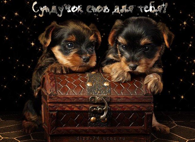 Открытки спокойной ночи с собачками и пожелания