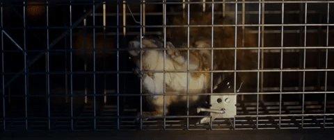 #DemonSquirrel #Poltergeist #DoubleFeature
