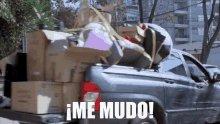 You Tube Argentina Woki Toki GIF