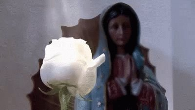 La Rosa De Guadalupe Rose GIF