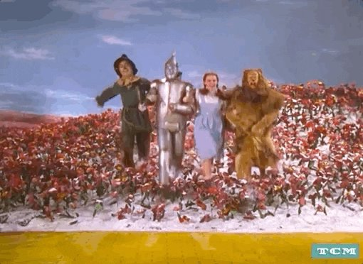 Wizard Of Oz Dorothy GIF by Turner Classic Movies