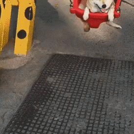 RT @DogecoinPoet: $DOGE out here just enjoying the swing back and forth, being a happy little #DOGE. https://t.co/r8CHQJFLNV