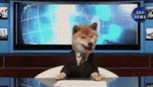 Japan Breakingnews GIF