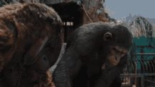 Apes Together Strong Apes Alone Weak GIF
