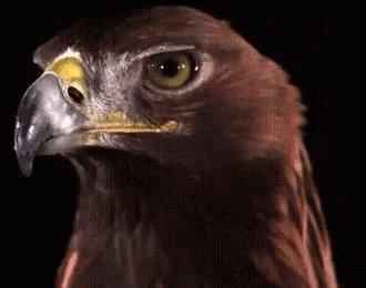 Eagle Smile GIF