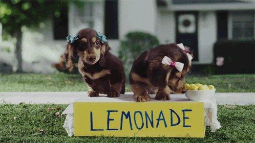 Dog Puppy GIF