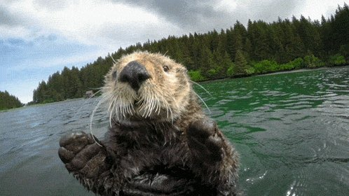 cute spy in the wild GIF by...