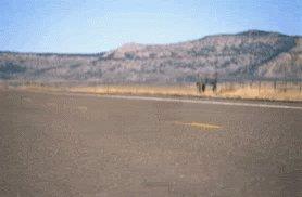 Lonely Desert GIF