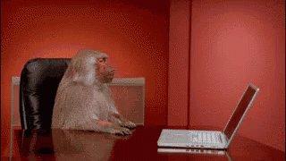 Monkey Pissed GIF