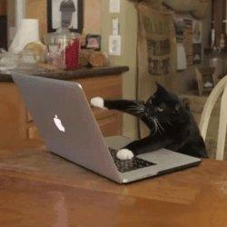 Cat Typing GIF