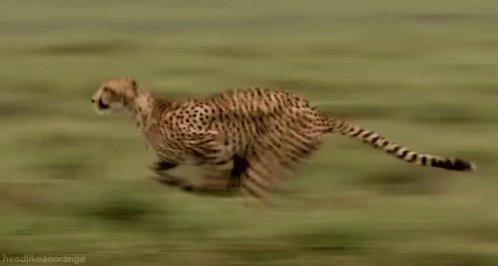 @IndiaPOCO 762Mbps download speed and 122Mbps upload speed on POCO M3 Pro during the speed test by  @anguskhng  #pocoindia  #pocom3pro  #madspeedkillerlooks  @IndiaPOCO  ,,, @poonamtrilok659 @Navyavegi @RubyAga9339 @MeghnaJ46032597 @Ruchita33281726 @GauravP26479152 @porwal_sarika https://t.co/sIIAaHutRS