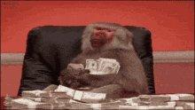 Baboon Monkey GIF