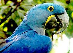 bird parrot GIF