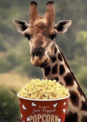 giraffe eating GIF
