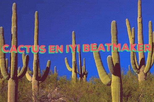 Cactusdolce Dolcebaba GIF