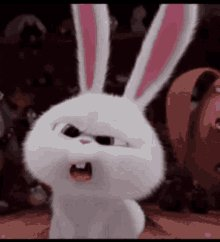 Bunny What GIF
