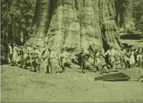 sequoia national park vintage GIF by US National Archives